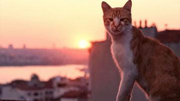 MONOMAXเอาใจ ทาสแมว ชมสี่ภาพยนตร์สำหรับเจ้าเหมียว!