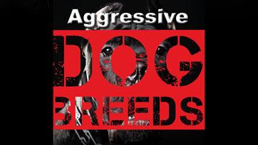 Scoop : Aggressive Dog Breeds ศึกษาพฤติกรรมสุนัขพันธุ์ดุ   Issue 164