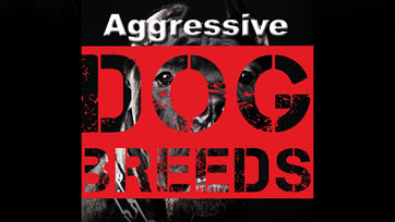 Scoop : Aggressive Dog Breeds ศึกษาพฤติกรรมสุนัขพันธุ์ดุ | Issue 164