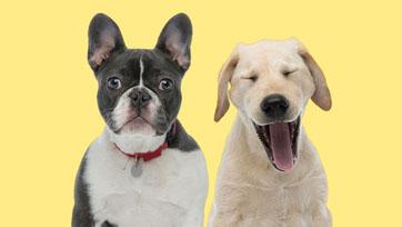 Scoop : Dog Training พฤติกรรมสุนัขขึ้นอยู่กับการเลี้ยงดู | Issue 164