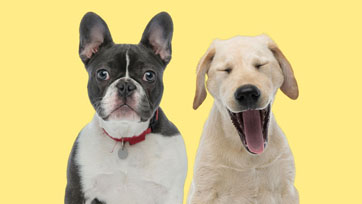 Scoop : Dog Training พฤติกรรมสุนัขขึ้นอยู่กับการเลี้ยงดู   Issue 164