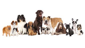 Scoop : กฎหมายและการเลี้ยงสัตว์ในต่างประเทศ   Issue 164
